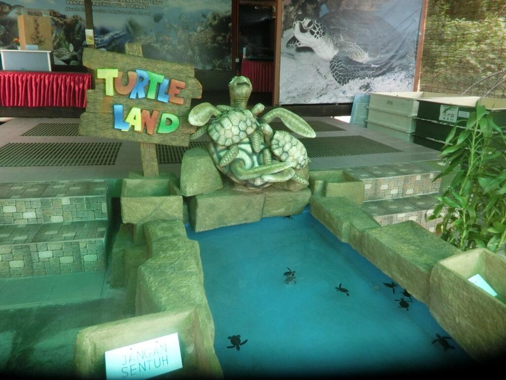 Turtle_land_at_turtle_beach