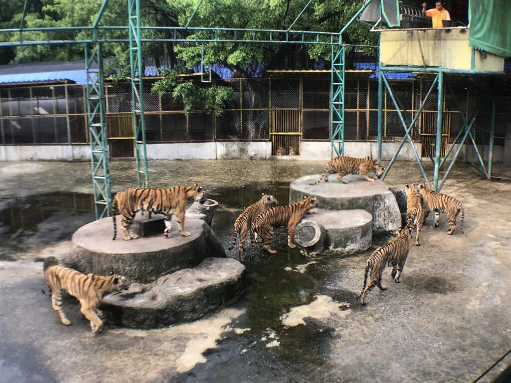 sriracha_zoo
