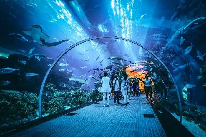 underwater-aquarium-in-dubai