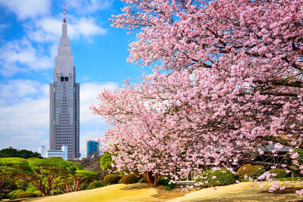 spring-in-tokyo